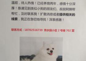 寻狗启示,急寻白色博美!!千元酬谢!!,它是一只非常可爱的宠物狗狗,希望它早日回家,不要变成流浪狗。