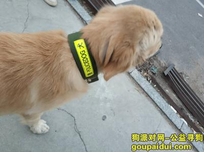 中山找狗主人,广东省,中山市,兴涌东路南,它是一只非常可爱的宠物狗狗,希望它早日回家,不要变成流浪狗。
