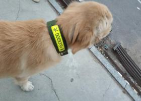 寻狗启示,广东省,中山市,兴涌东路南,它是一只非常可爱的宠物狗狗,希望它早日回家,不要变成流浪狗。