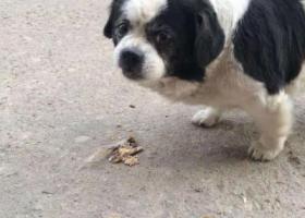 寻狗启示,青岛城阳夏庄史家泊小区走丢爱犬,找到的话愿意1000元酬谢,它是一只非常可爱的宠物狗狗,希望它早日回家,不要变成流浪狗。