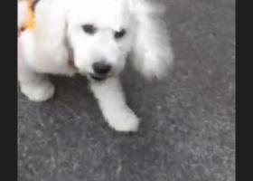 寻狗启示,寻狗启示  重金感谢,它是一只非常可爱的宠物狗狗,希望它早日回家,不要变成流浪狗。