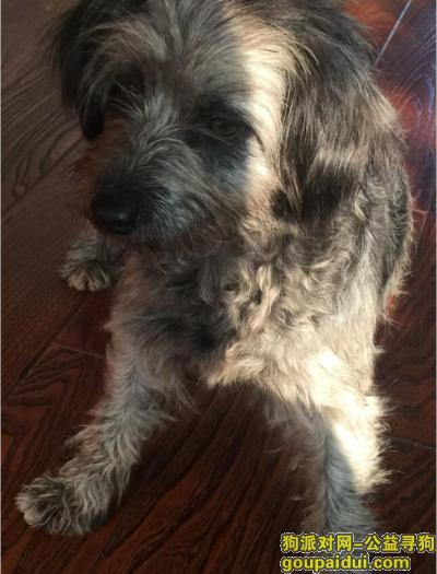 寻狗启示,大连沙河口区高家村附件捡到一条狗,它是一只非常可爱的宠物狗狗,希望它早日回家,不要变成流浪狗。