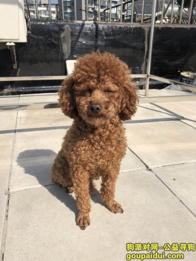 寻狗启示,南京火车站附近11月13日中午遗失一只穿着麋鹿衣服的泰迪,它是一只非常可爱的宠物狗狗,希望它早日回家,不要变成流浪狗。