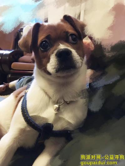邵阳寻狗启示,痛失爱狗,望捡到者与我联系。,它是一只非常可爱的宠物狗狗,希望它早日回家,不要变成流浪狗。