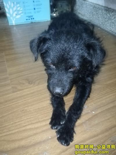 寻狗启示,苏州大学东区捡到一只黑色狗,它是一只非常可爱的宠物狗狗,希望它早日回家,不要变成流浪狗。