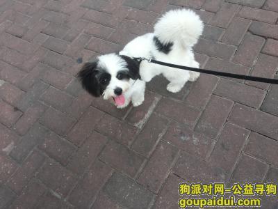寻狗启示,翻身宝辉大厦附近寻狗启示,它是一只非常可爱的宠物狗狗,希望它早日回家,不要变成流浪狗。