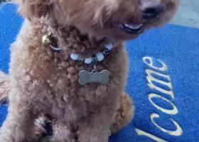 寻狗启示,在五里工业园区灵水利德隆购物广场附近走丢。,它是一只非常可爱的宠物狗狗,希望它早日回家,不要变成流浪狗。