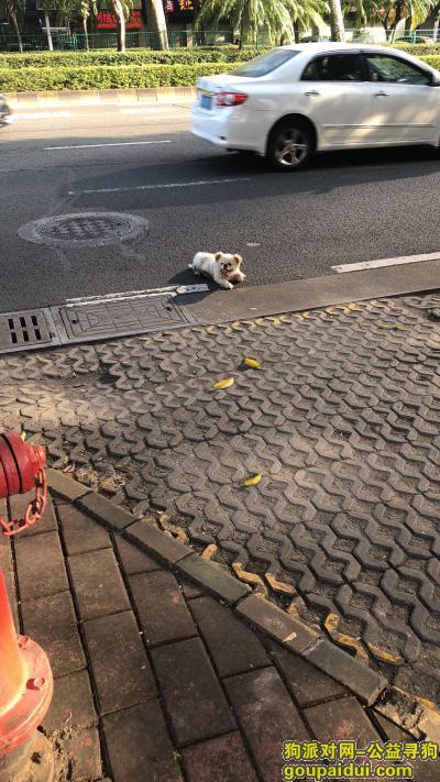 寻狗启示,中山三路捡到一只,它是一只非常可爱的宠物狗狗,希望它早日回家,不要变成流浪狗。