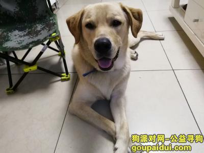 漯河找狗,找狗狗  大家帮帮忙  从小养到大  希望看到及时联系我,它是一只非常可爱的宠物狗狗,希望它早日回家,不要变成流浪狗。