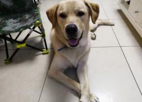 寻狗启示,找狗狗  大家帮帮忙  从小养到大  希望看到及时联系我,它是一只非常可爱的宠物狗狗,希望它早日回家,不要变成流浪狗。