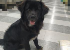 寻狗启示,黑色的小狗狗走失在浙江省温州市鹿城区松台农贸菜市场,它是一只非常可爱的宠物狗狗,希望它早日回家,不要变成流浪狗。