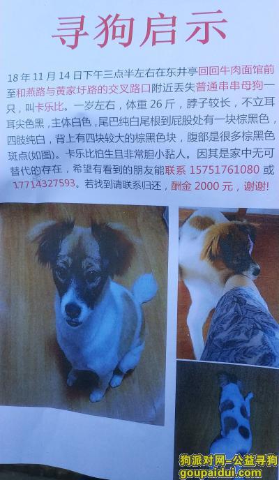 寻狗启示,南京寻狗14日于东井亭社区前交叉路口丢失普通串串母狗卡乐比,它是一只非常可爱的宠物狗狗,希望它早日回家,不要变成流浪狗。
