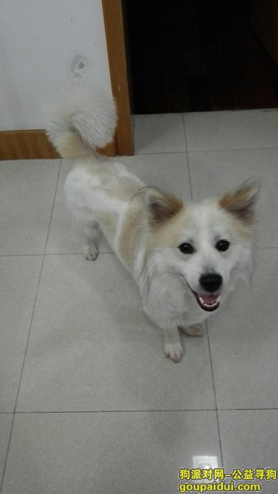 寻狗启示,常州新北区藻江花园寻找一只小公狗,它是一只非常可爱的宠物狗狗,希望它早日回家,不要变成流浪狗。