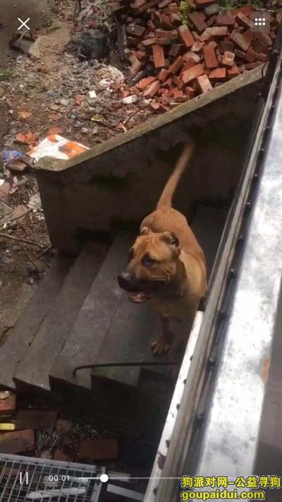 寻狗启示,狗狗黄色丢失时间2018年11月17号,1点15分左右 河街小花园,它是一只非常可爱的宠物狗狗,希望它早日回家,不要变成流浪狗。