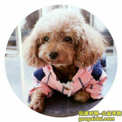 寻狗启示,寻找爱犬泰迪犬,急急急,必有重谢,它是一只非常可爱的宠物狗狗,希望它早日回家,不要变成流浪狗。