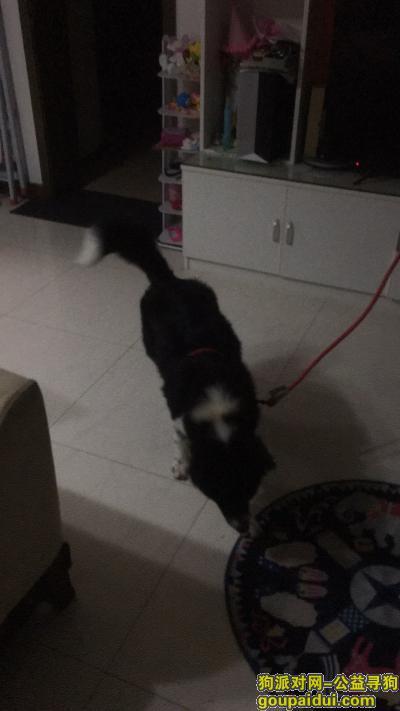 寻狗启示,寻找爱狗,它是一只非常可爱的宠物狗狗,希望它早日回家,不要变成流浪狗。