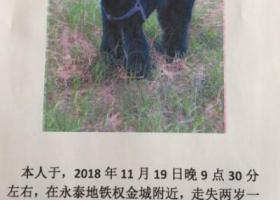 寻狗启示,海淀区清河永泰地铁站附近丢失黑色泰迪,它是一只非常可爱的宠物狗狗,希望它早日回家,不要变成流浪狗。
