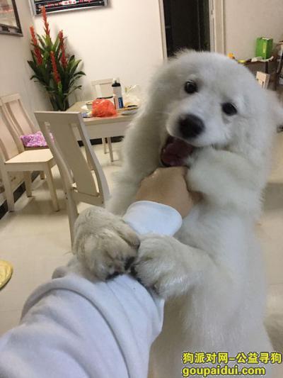 它是一只非常可爱的宠物狗狗,希望它早日回家,不要变成流浪狗.