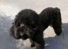 寻狗启示,宁波万科金色水岸寻狗启示,它是一只非常可爱的宠物狗狗,希望它早日回家,不要变成流浪狗。