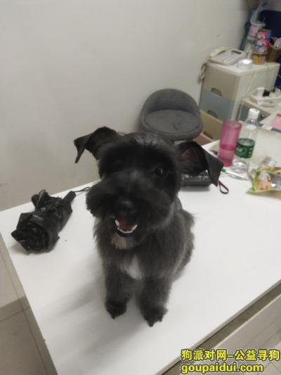 淮北寻狗启示,急求狗狗信息,天冷啦请帮助我的狗狗回家,它是一只非常可爱的宠物狗狗,希望它早日回家,不要变成流浪狗。