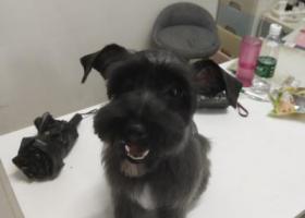 寻狗启示,急求狗狗信息,天冷啦请帮助我的狗狗回家,它是一只非常可爱的宠物狗狗,希望它早日回家,不要变成流浪狗。