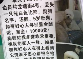 寻狗启示,广州白云区万元寻爱宠.   此生唯一,它是一只非常可爱的宠物狗狗,希望它早日回家,不要变成流浪狗。