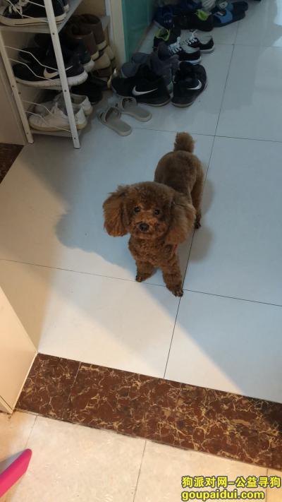 临沂捡到狗,寻找狗主人。我在兰山区北园路附近捡到泰迪一只,它是一只非常可爱的宠物狗狗,希望它早日回家,不要变成流浪狗。