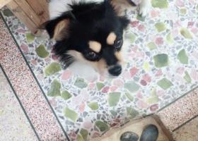 寻狗启示,希望好心人帮我找到狗,因为我是中学生,所以暂时没钱,它是一只非常可爱的宠物狗狗,希望它早日回家,不要变成流浪狗。