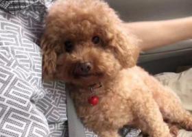 寻狗启示,寻狗启事(龙湖区长江公寓南区),它是一只非常可爱的宠物狗狗,希望它早日回家,不要变成流浪狗。