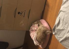 寻狗启示,捡到一只穿粉色衣服的狗,看着像被主人遗弃,它是一只非常可爱的宠物狗狗,希望它早日回家,不要变成流浪狗。