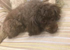 宝山区祁连山路这块2018/11/20号捡到这只狗狗!快来看看是不是你家的小宝贝