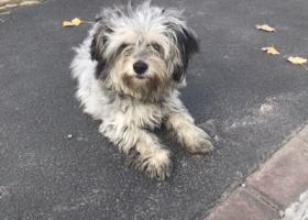寻狗启示,香花桥附近一只流浪狗,它是一只非常可爱的宠物狗狗,希望它早日回家,不要变成流浪狗。