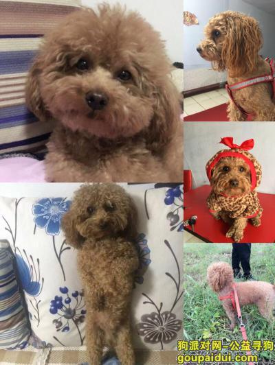 辽源寻狗启示,酬金2000寻狗,公狗,四岁,叫肉丸儿,它是一只非常可爱的宠物狗狗,希望它早日回家,不要变成流浪狗。