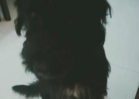 寻狗启示,捡到黑狗狗体型中等感觉是串全身黑,它是一只非常可爱的宠物狗狗,希望它早日回家,不要变成流浪狗。