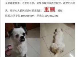 希望看到这个帖的好心人,帮忙寻找我被偷的爱犬,在广州番禺南村被偷狗贼偷了,寻回重酬3000元,联系电话13433972322,罗先生