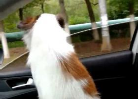 寻狗启示,常州戚墅堰戚厂工房北区寻狗,爱犬名字六六,重金酬谢!,它是一只非常可爱的宠物狗狗,希望它早日回家,不要变成流浪狗。
