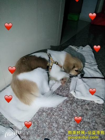 ,狗狗是串串,但对我来说很珍贵,寻回酬谢,它是一只非常可爱的宠物狗狗,希望它早日回家,不要变成流浪狗。