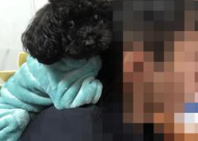 寻狗启示,大矸石湫村寻黑色泰迪,它是一只非常可爱的宠物狗狗,希望它早日回家,不要变成流浪狗。