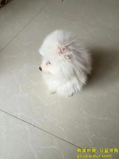 ,!!!!!!!!?!,它是一只非常可爱的宠物狗狗,希望它早日回家,不要变成流浪狗。