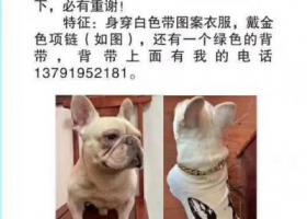 寻狗启示,黄岛区杭州路与北京路交叉口酬谢五千元寻找法斗,它是一只非常可爱的宠物狗狗,希望它早日回家,不要变成流浪狗。