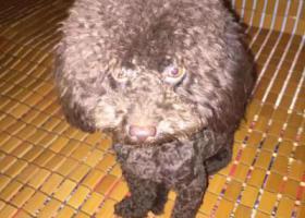 寻狗启示,lakey你在哪快回来吧,它是一只非常可爱的宠物狗狗,希望它早日回家,不要变成流浪狗。