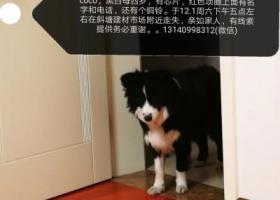 寻狗启示,提供有效线索,重酬5000。,它是一只非常可爱的宠物狗狗,希望它早日回家,不要变成流浪狗。