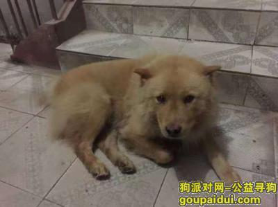 咸宁寻狗启示,湖北省赤壁市寻爱犬蛋蛋,它是一只非常可爱的宠物狗狗,希望它早日回家,不要变成流浪狗。