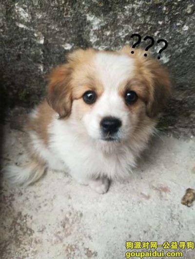 武夷山寻狗,小土狗 丢失一周左右,它是一只非常可爱的宠物狗狗,希望它早日回家,不要变成流浪狗。