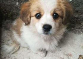 寻狗启示,小土狗 丢失一周左右,它是一只非常可爱的宠物狗狗,希望它早日回家,不要变成流浪狗。