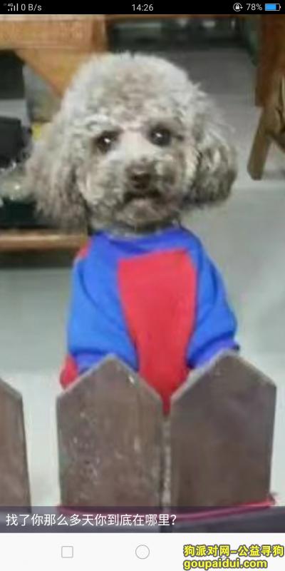 ,重金寻浅咖啡色泰迪狗狗4岁公犬,它是一只非常可爱的宠物狗狗,希望它早日回家,不要变成流浪狗。