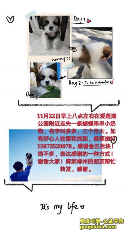 郴州寻狗网,小奶狗三个月大丢失,请好心人帮帮忙!,它是一只非常可爱的宠物狗狗,希望它早日回家,不要变成流浪狗。
