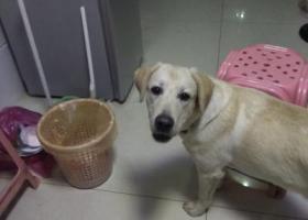 寻狗启示,胡埭镇富润小区寻狗万洲谢。,它是一只非常可爱的宠物狗狗,希望它早日回家,不要变成流浪狗。