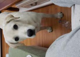 寻狗启示,好心人帮忙留意一下谢谢打大家了,它是一只非常可爱的宠物狗狗,希望它早日回家,不要变成流浪狗。