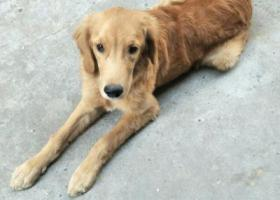 寻狗启示,狗狗你在哪里,一直在找你,它是一只非常可爱的宠物狗狗,希望它早日回家,不要变成流浪狗。